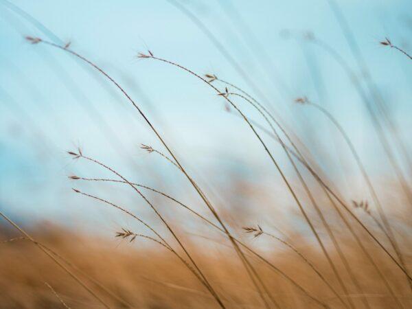 calm breeze